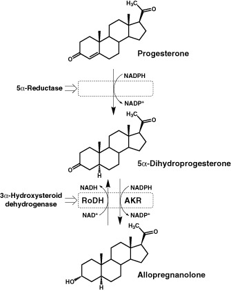 Suppressed 3a-hydroxysteroid may be the cause? - General Discussion